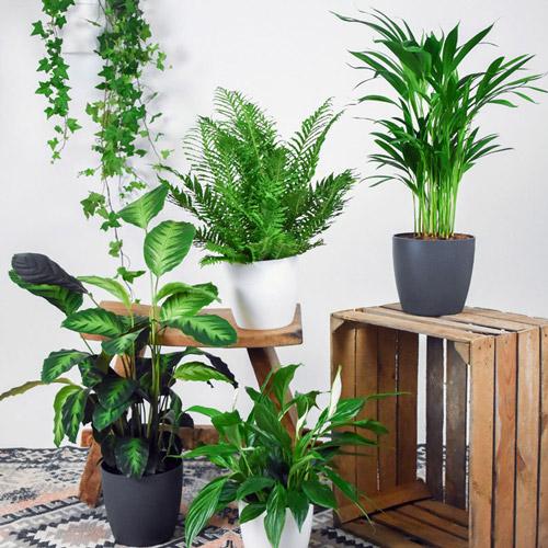 گیاهان آپارتمانی مفید برای سلامتی + جزئیات