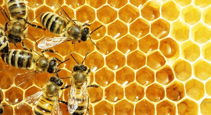 حدیث روز/ تأثیر شگفتانگیز عسل در سلامت بدن