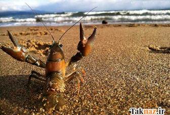 نکاتی جالب درباره خرچنگ ها که نمی دانید!