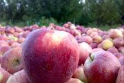 با مصرف این میوه «سرطان» را از خود دور کنید