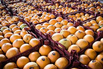 واردات پرتقال برای بازار شب عید یک ضرورت تلقی میشود
