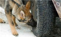 سگ ها بهترین بمب یاب ها!