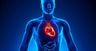 حقیقتی جالب درباره اندامهای بدن