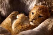 ناکامی «شیر شاه» در جلب توجه منتقدین