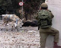 اسرائیل به دنبال ۱۰۰ هزار راس الاغ مصری