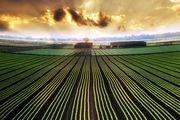 دولت برنامهریزی میانمدت و بلندمدت مناسبی در حوزه کشاورزی ندارد