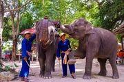 لنگردهکدهی فیلها پاتایا در تور های تایند