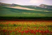 طبیعت بکر «شیلگان دره»/ گزارش تصویری