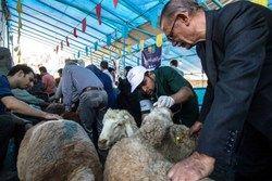 هشدار وزارت بهداشت در آستانه عید قربان