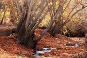 طبیعت بکر اطراف مشهد