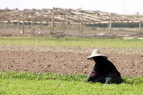 ویژهخواران در کشاورزی چگونه عمل میکنند؟