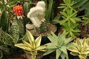 گیاه کاکتوس عاملی موثر برای کاهش آلودگی هوا