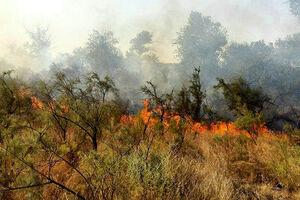 جزئیات جدید از آتشسوزی منطقه «گاچال» لرستان