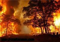 200 هکتار از باغات سیاهو در آتش سوخت