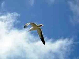 خداوند چگونه روزی پرنده کور را داد؟