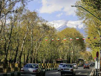 شناسایی 106 درخت چنار کهنسال در خیابان ولی عصر (عج)