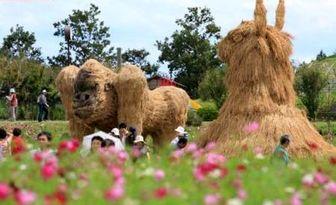 کشاورز هم کشاورزان ژاپنی / تصاویر