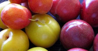 التهاب و خونریزی را با خوردن این میوه مهار کنید