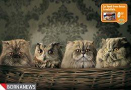 نقش حیوانات در تبلیغات دنیای تجاری + عکس