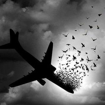 همدردی کارگردانان سینمای مستند با داغدیدگان هواپیمای اوکراینی