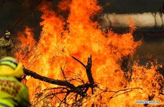دستگیری صدها عامل حریق عمد در جنگلهای استرالیا