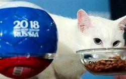 پیش بینی گربه پیشگو درباره بازی بلژیک و فرانسه