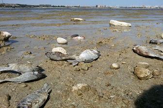 کاهش سطح آب دریاچه شورابیل اردبیل علت مرگ ماهیان عنوان شد