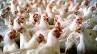قیمت مرغ در اولین روز ماه رمضان