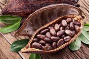 خوراکی خوشمزه و پرطرفداری که مانع از پیرشدنتان میشود