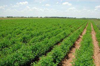 توصیه های ۵ روزه هواشناسی کشاورزی