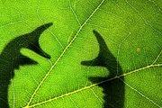 برندگان مسابقه عکاسی از حشرات /گزارش تصویری