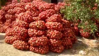 دو هزارتن انار داراب روی دست باغداران
