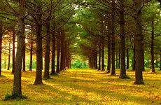 دانشمندان صدای نفس درختان را شنیدند!