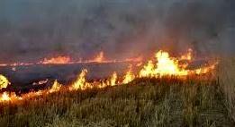 تالاب میانگران ایذه در حصار آتش