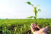 تولید سالیانه 120 تن انواع محصولات کشاورزی