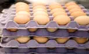 قیمت تخم مرغ کاهش می یابد