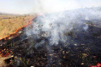 جنگل گیان در محاصره آتش + تصاویر