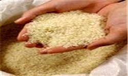 واردات برنج همچنان ممنوع!