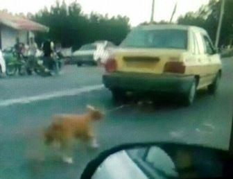 دوماه حبس در انتظار راننده تاکسی حیوان آزار