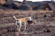 سگها در حال تبدیل شدن به مشکلات روز دنیا