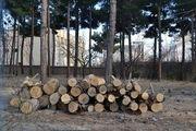تکذیب خبر قطع درختان محدوده استادیوم آزادی