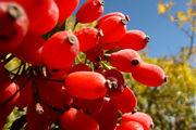 ارزش تغذیه ای میوه زرشک