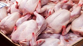 متعادل شدن قیمت مرغ طی ۲ هفته آینده
