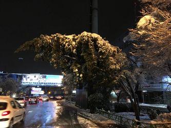 درخت 5