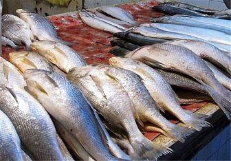 دلیل گرانی ماهی؛ ادامه حضور کشتیهای چینی در عمان و خیلجفارس