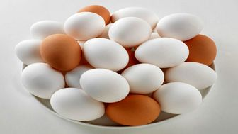 توقف صادرات تخم مرغ غیرکارشناسی است