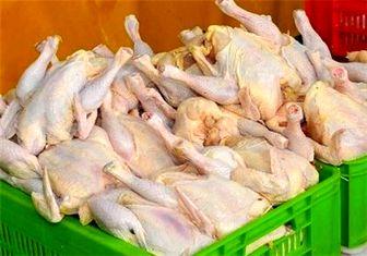 مرغ ارگانیک نداریم