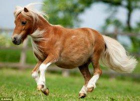 کوچکترین اسب جهان مفقود شد!