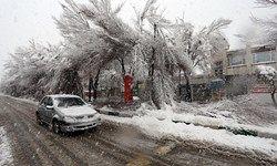 سقوط درخت روی خودرو بهدلیل بارش برف+ عکس