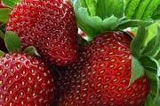 خوراکی هایی که پوستتان را زیبا و درخشان می کند